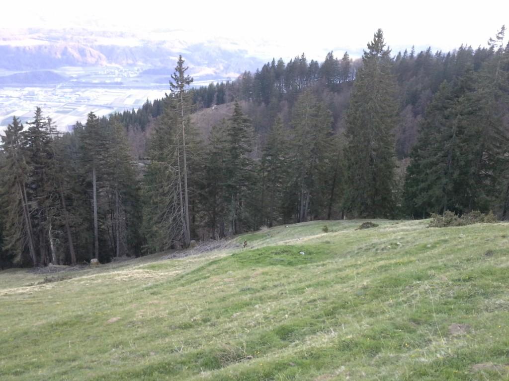 Weg zum Thauerer Zunterkopf