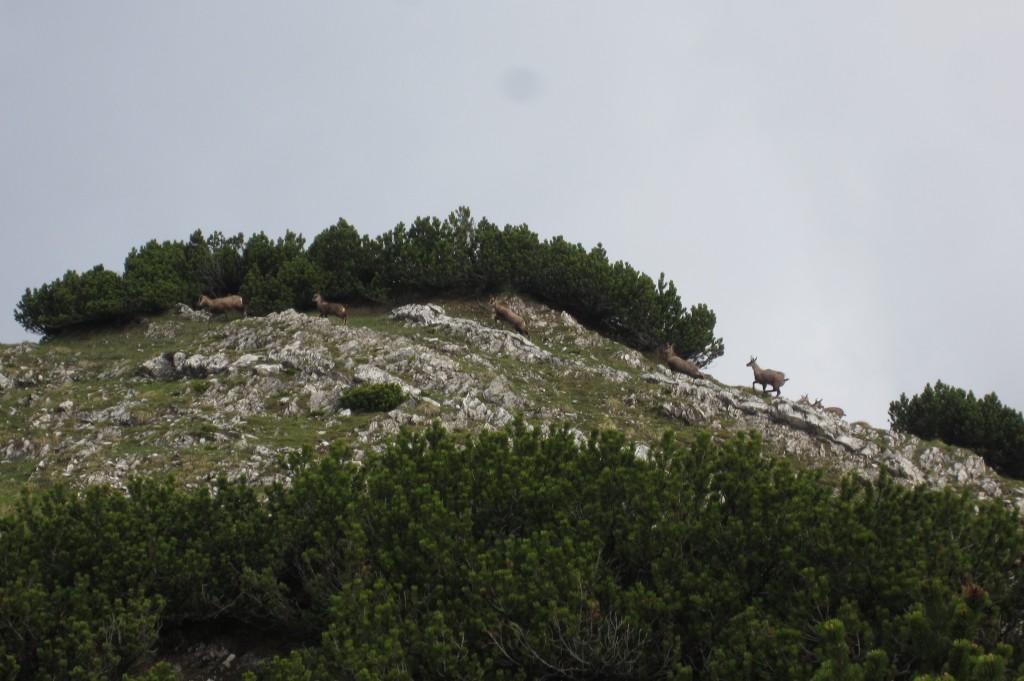 Seeberg Seekarspitze (15)