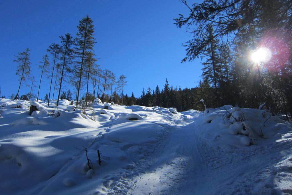 Sattelberg (3)