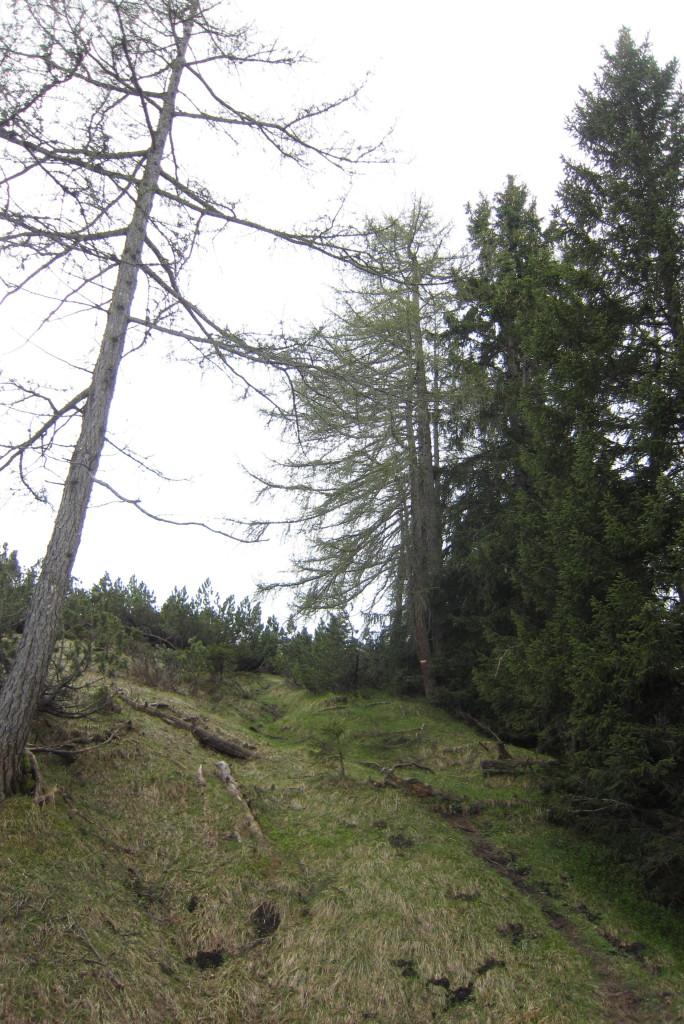Haller Zunterkopf (18)