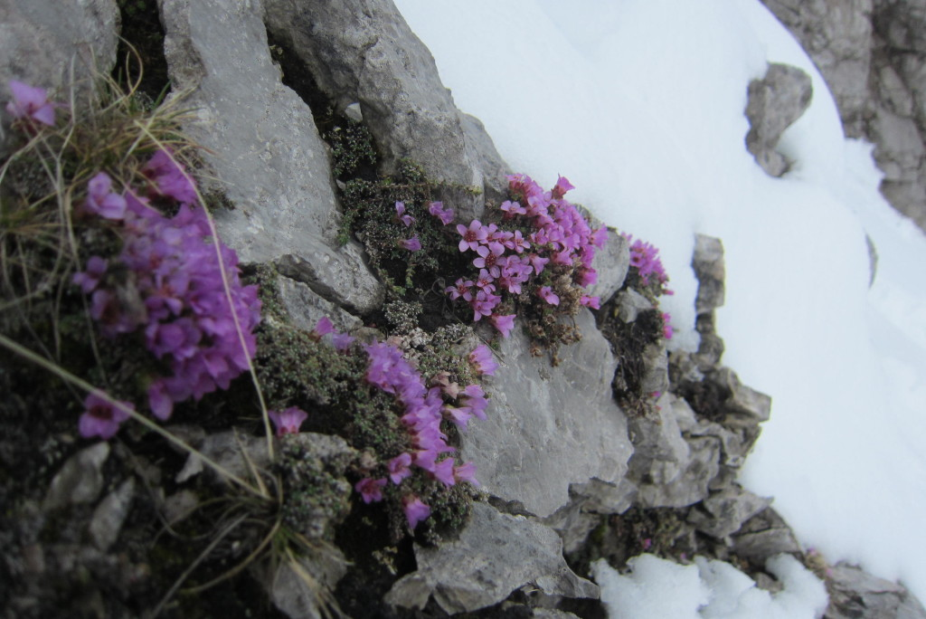 Lattenspitze, Stempeljoch (48)