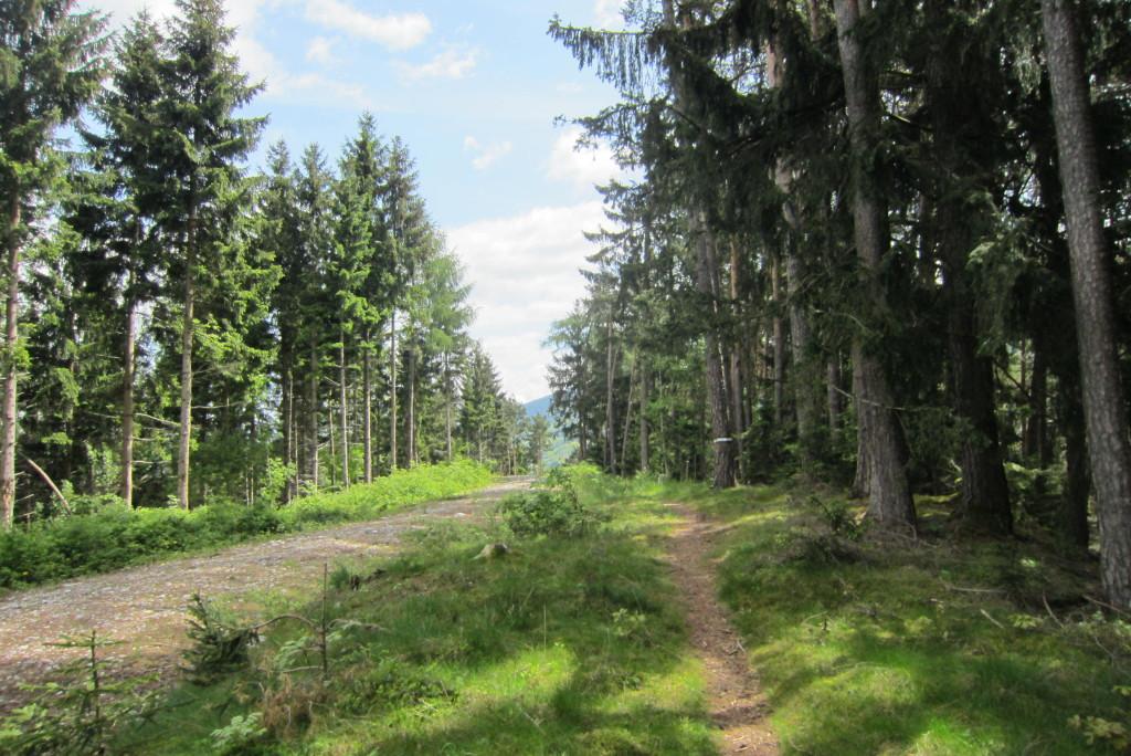 Neunerspitze, Viggarspitze, Bärenbader Jöchl(10)