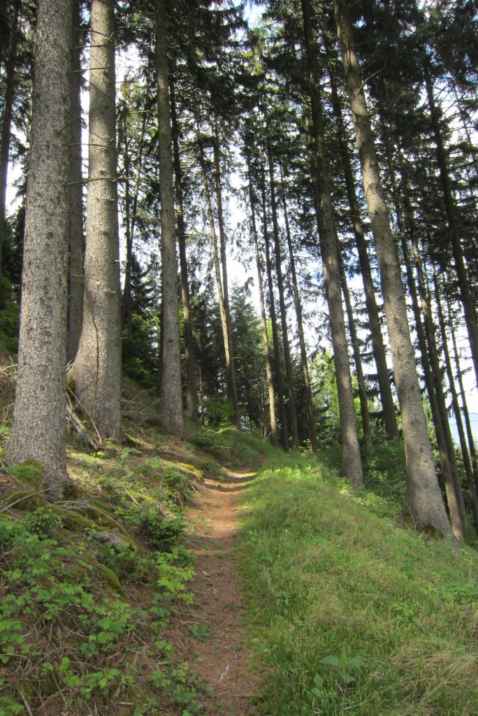 Neunerspitze, Viggarspitze, Bärenbader Jöchl(8)